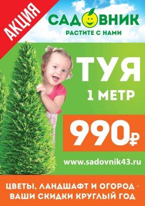 Туя по 990 рублей!