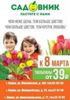 Тюльпаны к 8 марта всего по 39 рублей!