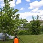 Как выбрать опрыскиватель для вашего сада